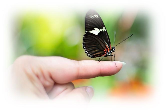 papillon - shiatsu