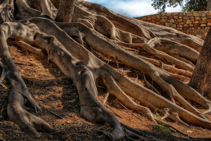 racines origines