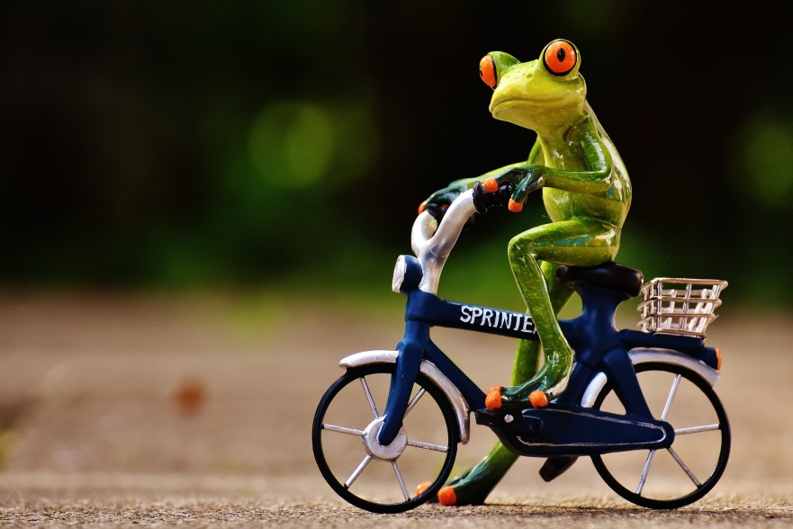 grenouille velo gym joviale